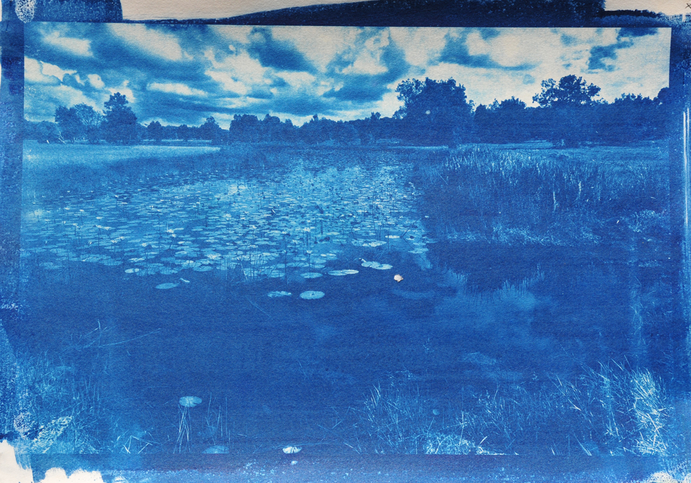 Byron lilis cyanotype